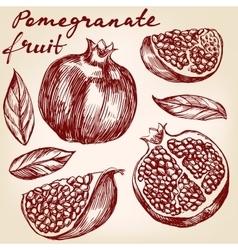 fruit pomegranate set hand drawn vector image vector image