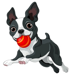 Boston terrier holds ball vector