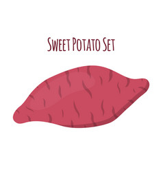 brown batatsweet potatoorganic healthy vegetable vector image