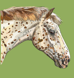 colorful horse portrait-2 vector image
