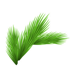 green lush spruce branch isolated on white vector image