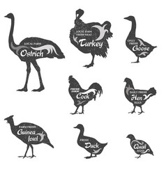 poultry silhouette sign set livestock groceries vector image