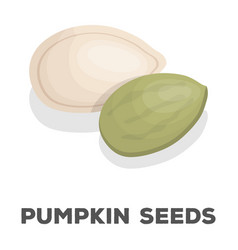 pumpkin seedsdifferent kinds of nuts single icon vector image