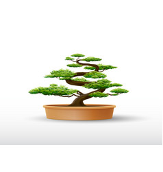 bonsai plant in the pot vector image