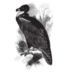 Brown vulture vintage vector