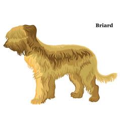 Colored decorative standing portrait of briard vector