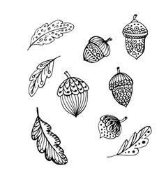 Doodle acorns and leaves black outline vector