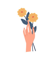female hand holding two yellow chrysanthemums vector image
