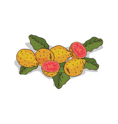 Isolated clipart guava vector
