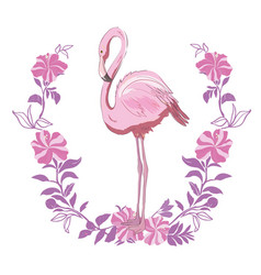 Pink flamingo isolated on the white background vector
