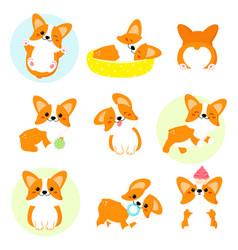 set cute corgi vector image