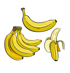 Set of yellow bananas vector