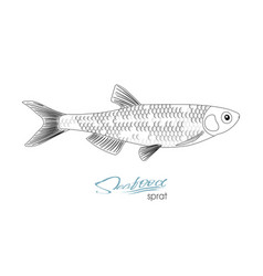 Sprat sketch fish icon isolated marine vector