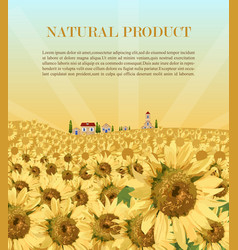 Sunflowers field background summer vector
