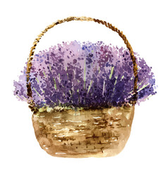Basket with lavender vector