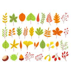 colorful autumn leaves autumnal yellow leaf vector image