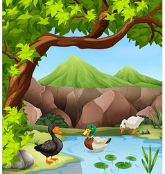 Ducks swimming in the pond vector