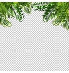 frame with green palm leaf isolated transparent vector image