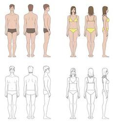 Human figure vector