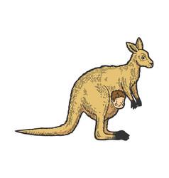 Kangaroo with human bacolor sketch vector