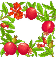 pomegranate branches frame vector image