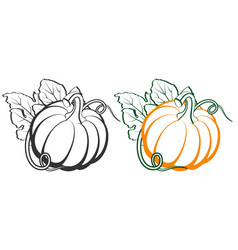 pumpkins with leaves silhouette on white vector image