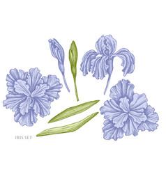 Set hand drawn pastel iris vector