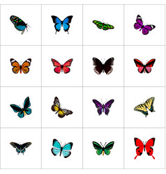 Set of moth realistic symbols with spicebush vector