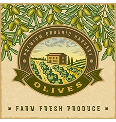 Vintage colorful olive harvest label vector image vector image