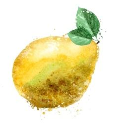 Pomelo logo design template fruit or food vector