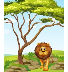 A lion under tall tree vector