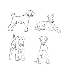 Airedale terrier dog simple sketch on a white vector