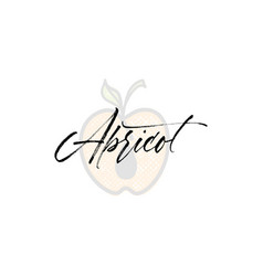 apricot word on background fruit web vector image