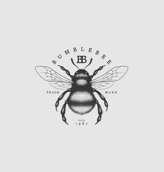 bumblebee vintage label vector image