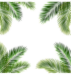 frame with palm leaf isolated white background vector image