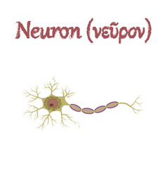 Human organ icon in flat style neuron vector