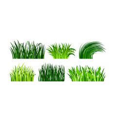 Six types of different tufts of green grass vector