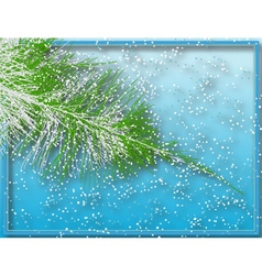 winter fir vector image vector image