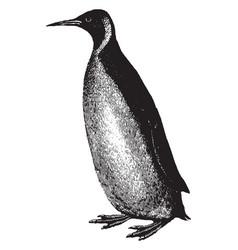 Penguin vintage vector