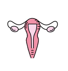 Uterus fallopian tubes anatomy female vector