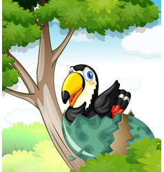 toucan bird hatching egg on tree vector image vector image