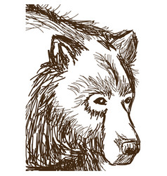 Animal wild bear face hand-drawing vector