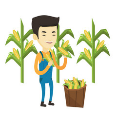 Farmer collecting corn vector