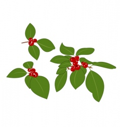 red berries vector image