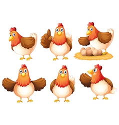 Six egg-laying hens vector image