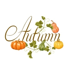 Autumn background with pumpkins Decorative vector