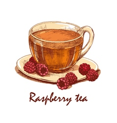 Colored hand drawn cup of raspberry tea vector image