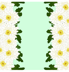 white mum chrysanthemum flower border vector image