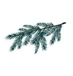 Blue realistic branch of fir tree fir branches vector
