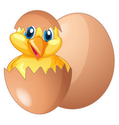 Chick coming out from egg vector